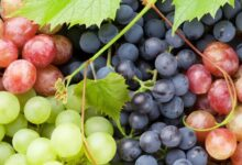 Photo of Wonderful Health Benefits of Grapes that Will Leave You Surprised!