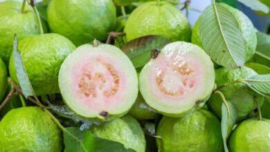 Photo of Amazing Health Benefits of Guava and Guava Leaves